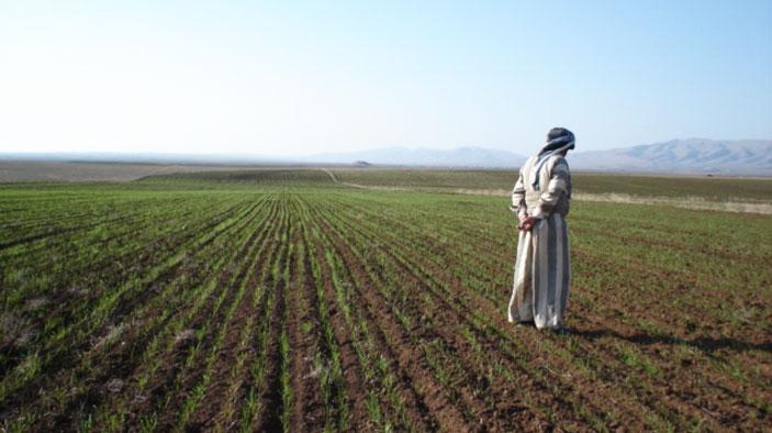 نتيجة بحث الصور عن الزراعة العراقية