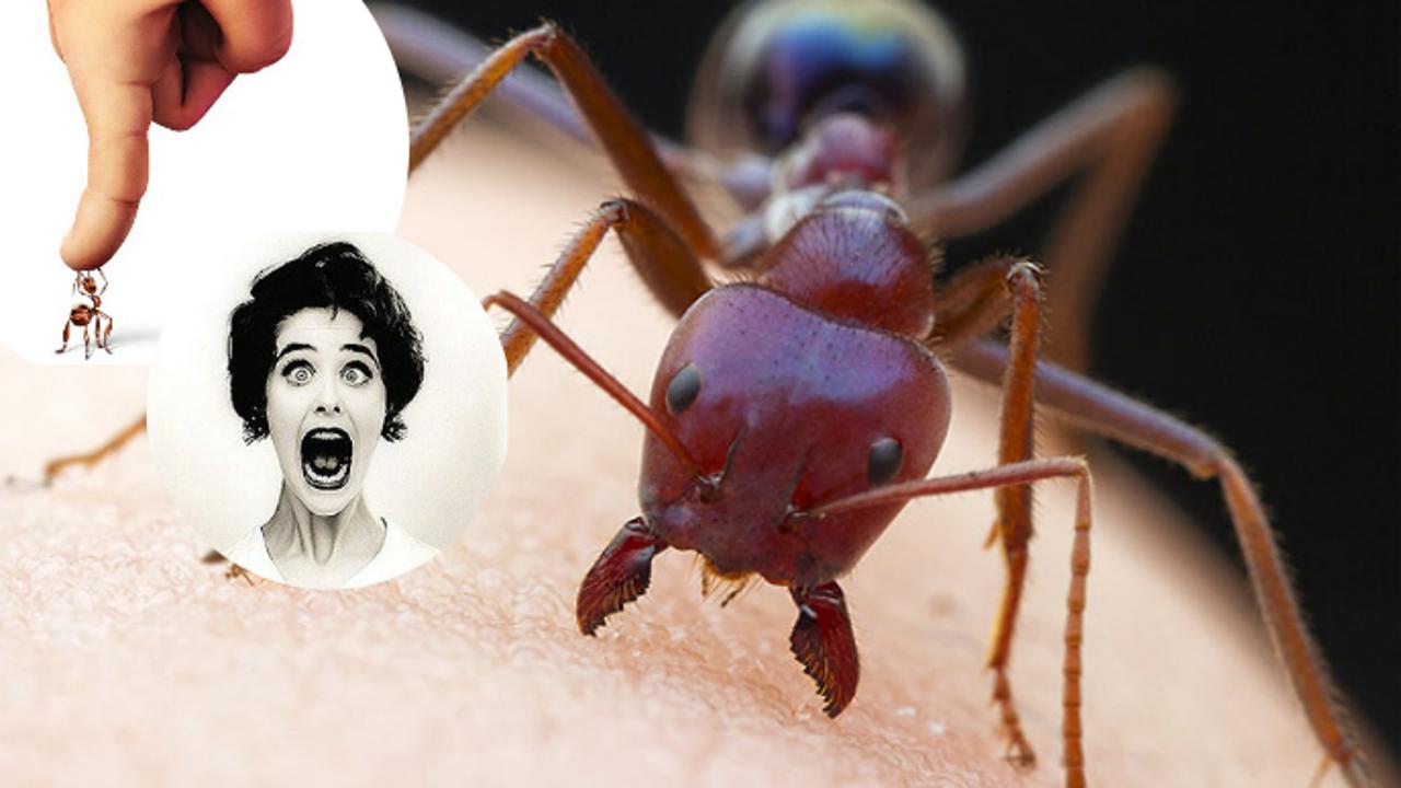 اذا قرصتك نملة .. اشكرها ولا تقتلها لهذه الأسباب!
