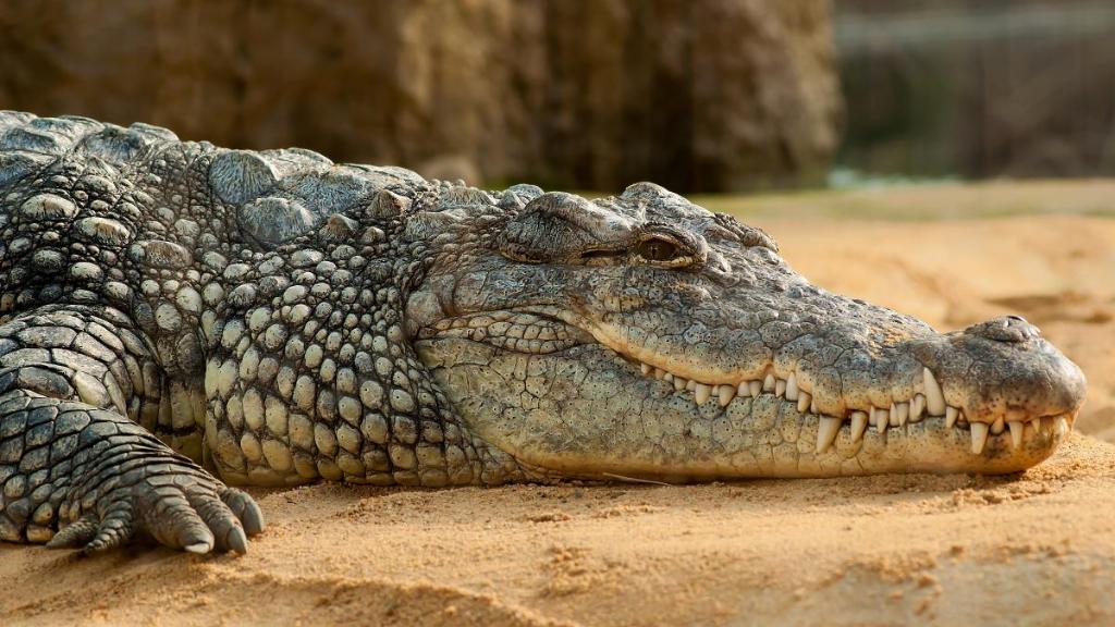 انتقاما لمقتل شخص بين فكي تمساح.. مجزرة مروعة تطال قرابة 300 تمساحا في إندونيسيا
