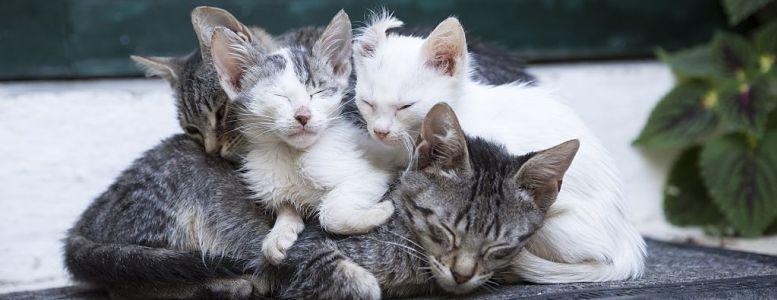 مواء القطط.. دراسة تفسر ما تقوله لنا (صور+فيديو)
