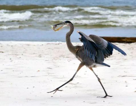 8 صور جميلة من الشاطئ.. لكل مخلوق حكاية